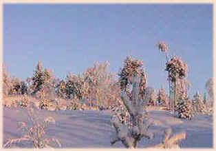 talvi.23