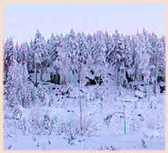 talvi.9