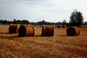 Heinäpaaleja paltaniemeläisellä pellolla.