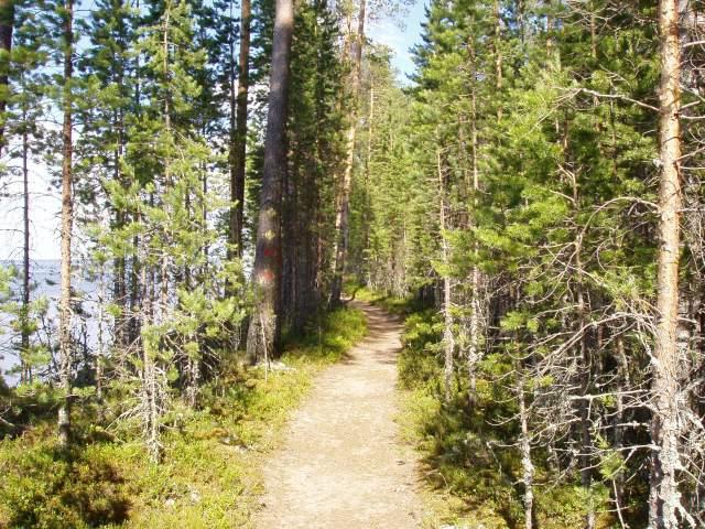 Luontopolku kiemurteleePantioniemen ja Rapsukankaan törmillä.