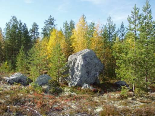 Järeitä siirtolohkareita lojuu siellä täällä Akkovaaran rinteillä. Kivet ovat asettuneet sijoilleen liki 10000 vuotta sitten.