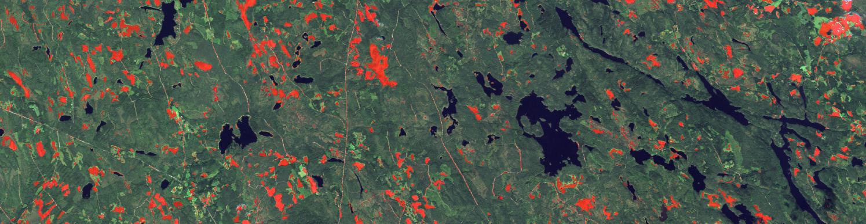 Hakkuut.fi